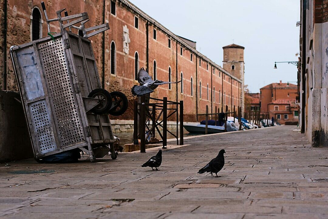 Fondamenta de la Tana with a garbage collection cart and birds,  and the Arsenale wall
